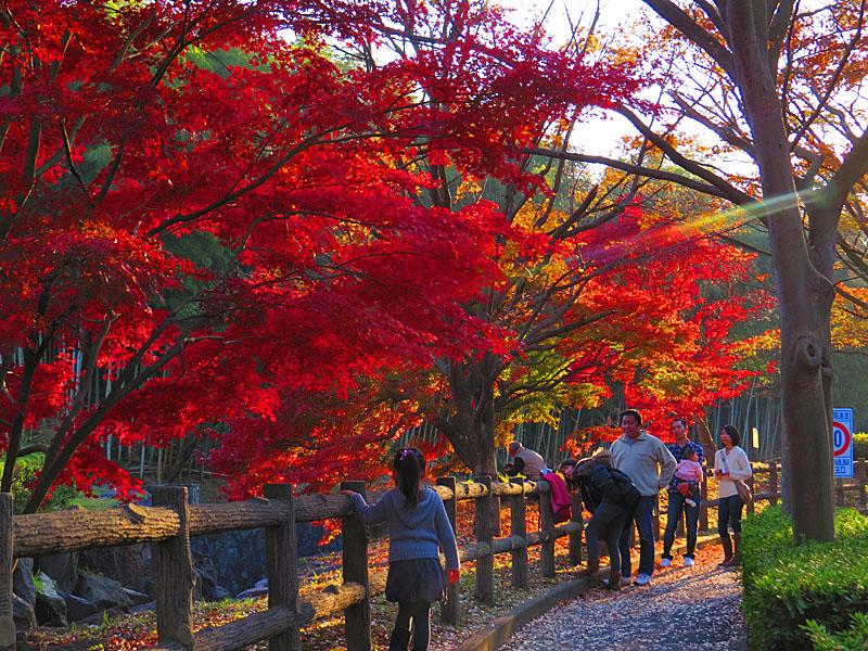 131124横須賀市営公園墓地1