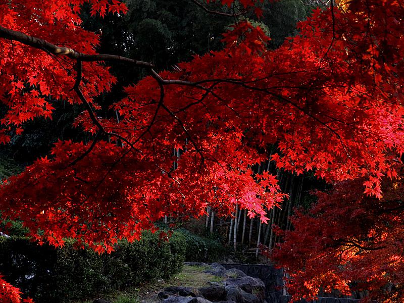 131124横須賀市営公園墓地2