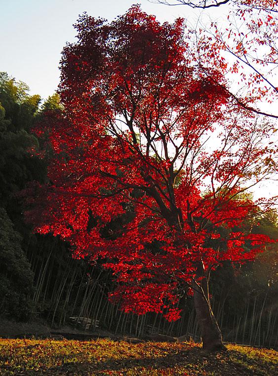 131124横須賀市営公園墓地4