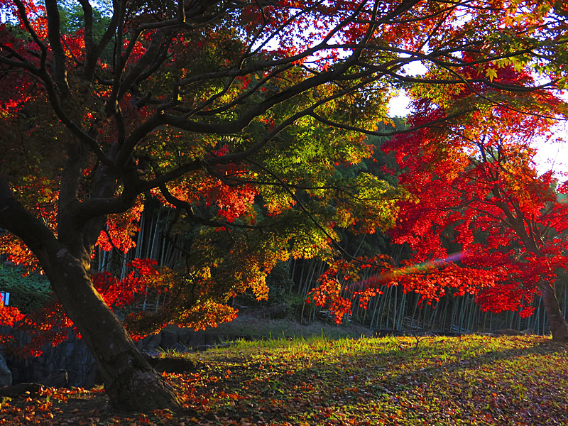 131124横須賀市営公園墓地5