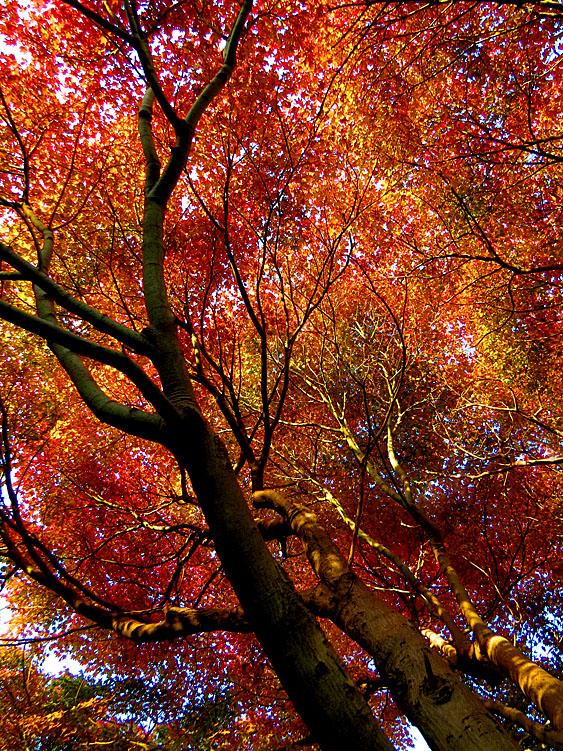 131124横須賀市営公園墓地7