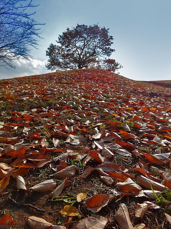 131210枯葉と榎の丘