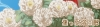ブログトップ牡丹 (2)