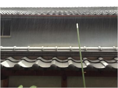 雨とすき焼き250616_01
