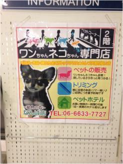 ワンちゃんネコちゃん250920
