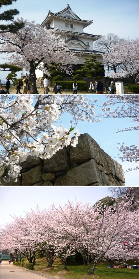 a桜P1220983