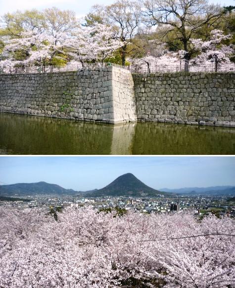 a丸亀城と桜
