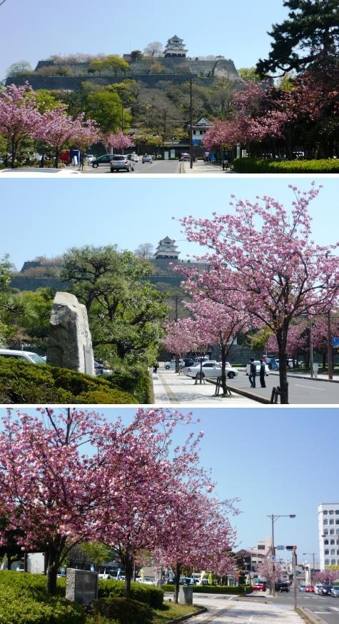 a丸亀城とボタン桜