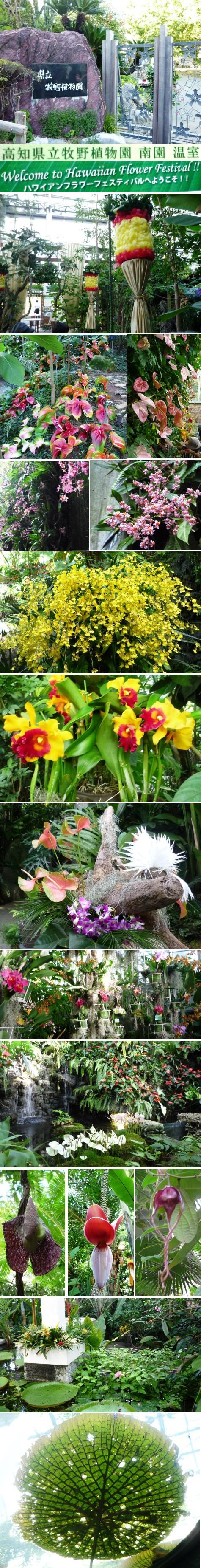a県立牧野植物園P1260869