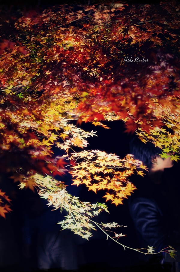 tukinoisimomijikouen_05.jpg