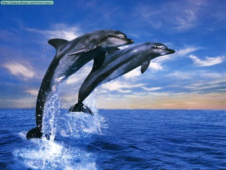 Wallpaper_-_Animals_Dolphin_Duet.jpg