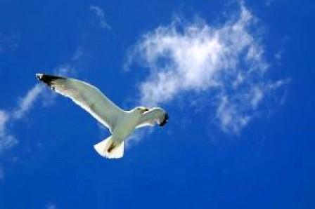 free-like-a-bird_2623938.jpg