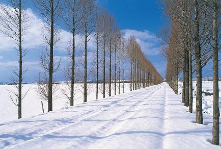 河北潟冬のメタセコイヤ
