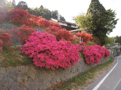 峨山キリシマ 7