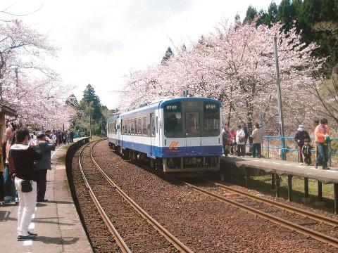 さくら駅 1