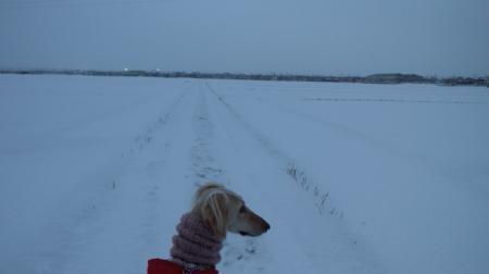 雪道散歩 みに