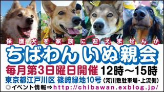 chibawan_teiki_inuoyakai2013_320x180.jpg