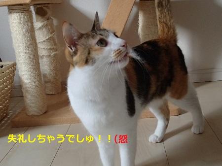 20140118_85.jpg