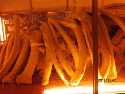 IMG_1327 クジラの骨.jpg