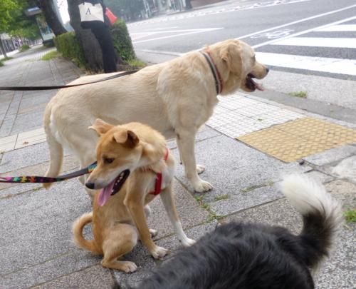 さんぽ16_convert_20130716193434