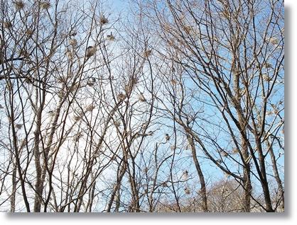 鳥の巣マンション