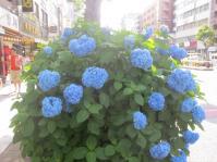 IMG_4199d.jpg