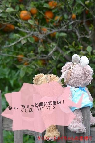 チビ・シェリちゃん2