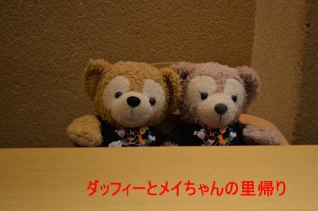 2013-8-10花 (2)