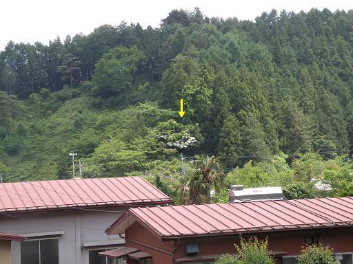 yamabo671.jpg