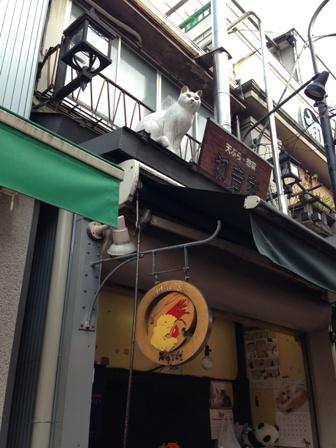 谷中銀座の甲板猫白