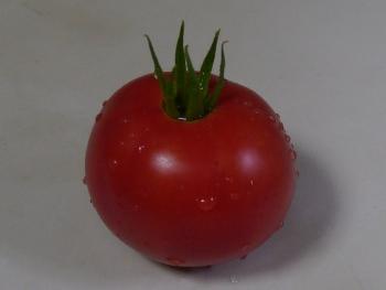 P1010063収穫