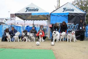 20130330_frontale (3)