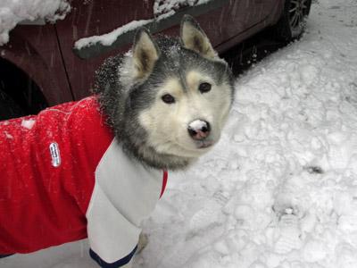 鼻に雪をつけたトリュフ