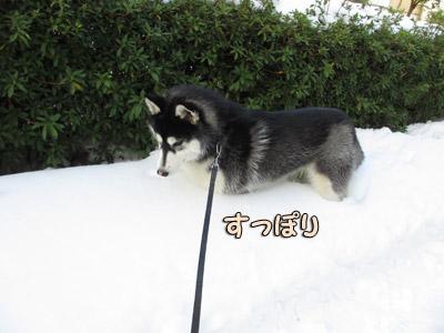雪の思い出