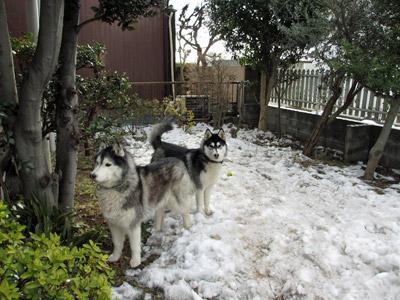 雪がなくなりつつある庭