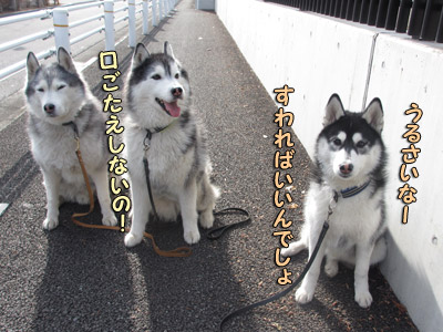 新年の三兄弟