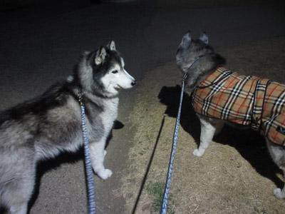 リリーちゃんと千波湖散歩