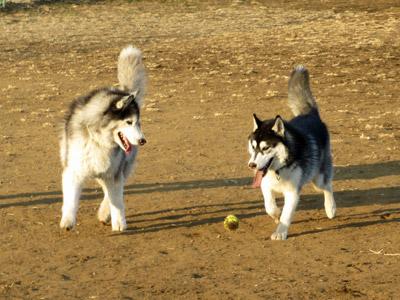 ボールを追うスフレ&ポトフ