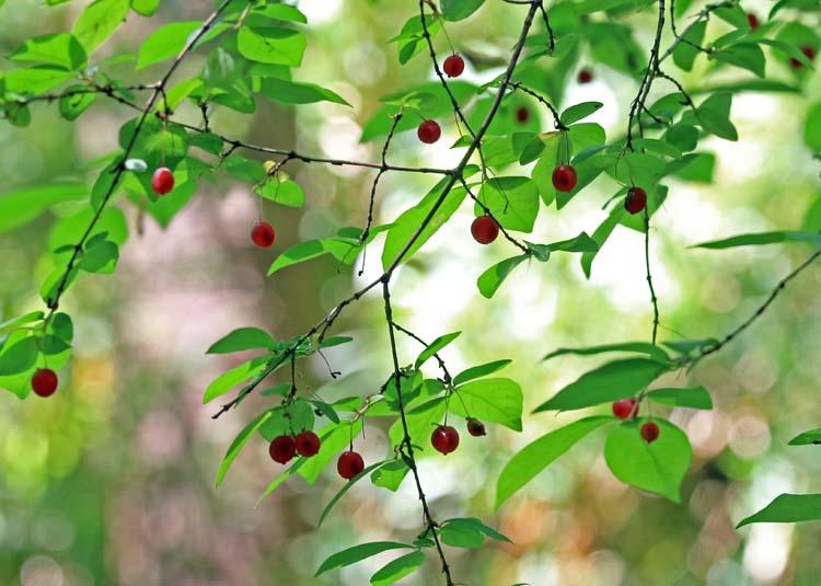 13uguisukaguraMIYA_15.jpg
