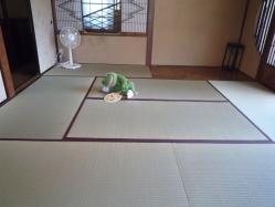summer-frog1.jpg