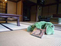 summer-frog3.jpg