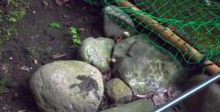summer-frog5.jpg