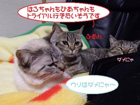P1192438_c.jpg
