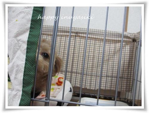 mini2IMG_0011-20141210.jpg