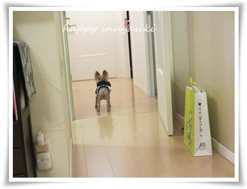 mini2IMG_0031-20141211.jpg