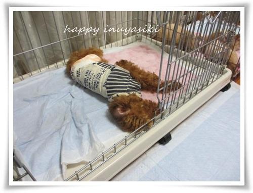 mini2IMG_0049-20141111.jpg