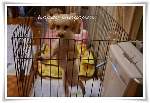 mini2P1390866-20141211.jpg