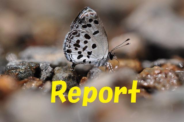 ゴイシ REPORT