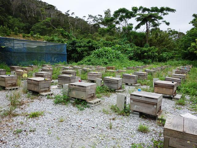 オーシッタイ養蜂7