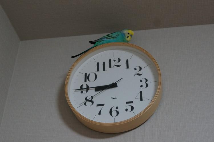 オン・ザ・掛け時計